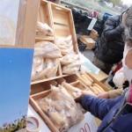 20120129-tokushima (22)