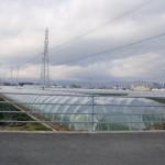 20120129-tokushima (24)
