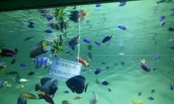葛西水族館
