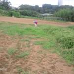 20130804-farm (1)