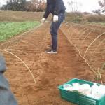 大根収穫祭4