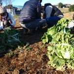 20170115farm (10)